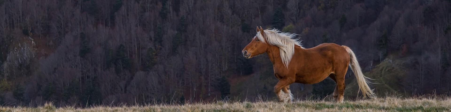 chevaux221-001-dominique-steinel-2726