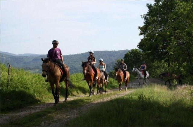 Equitation, Rando avec chiens, Sortie chien de traineaux ...