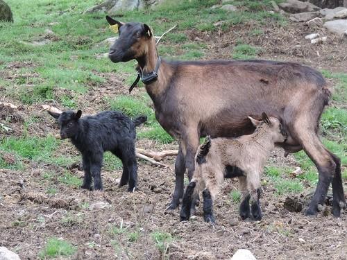 Besichtigungen auf dem Bauernhof