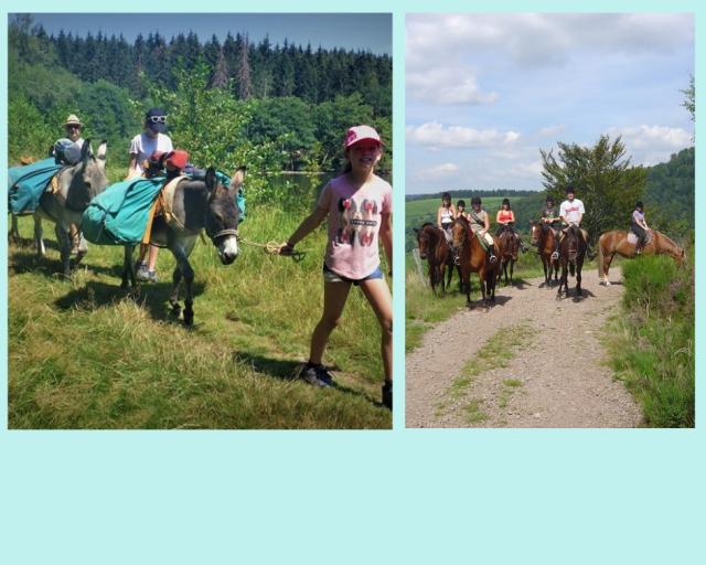 Horse riding, Hiking with dogs or donkeys,  wheeled dog sledging rides ....