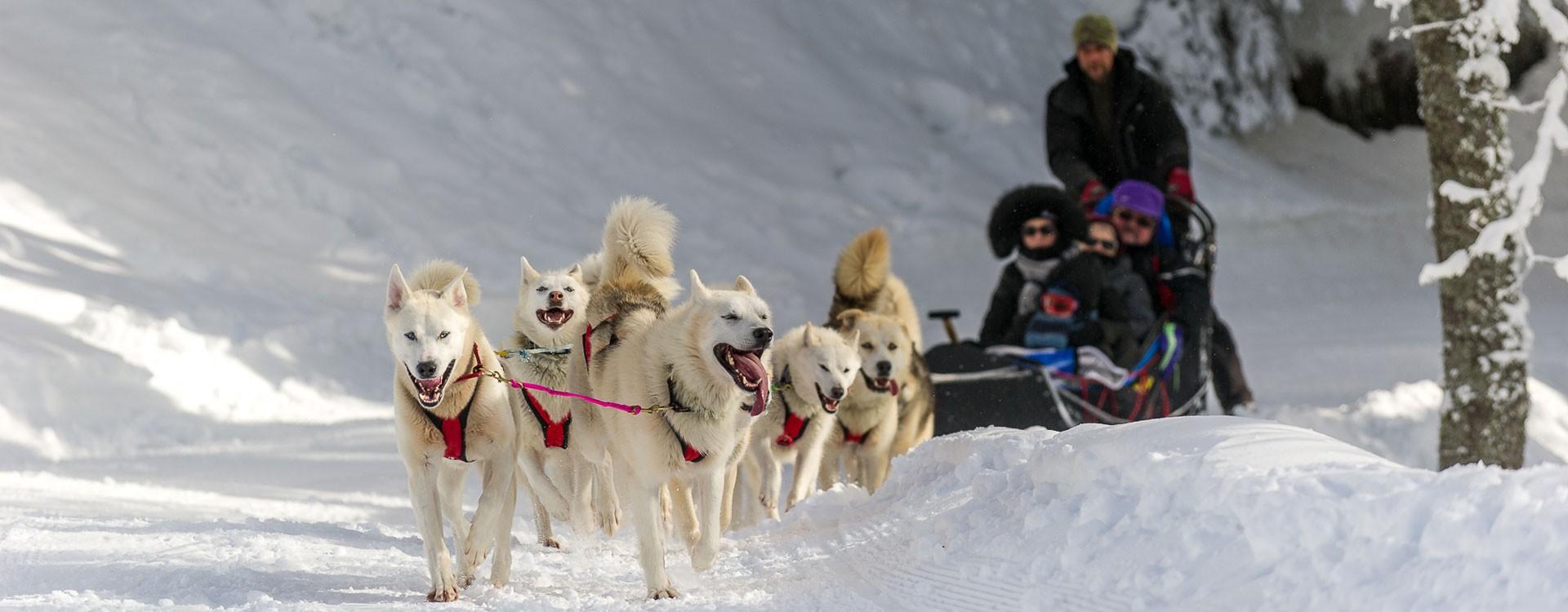 chiens-hiver-585