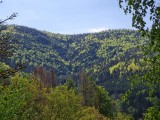 chalet-bussang-vosges-wifi-location-10-199345